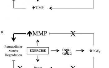 WIR: NSAIDs and Impairment of Tissue Adaptation Post Exercise